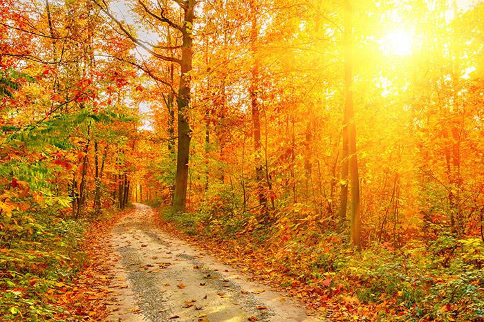 autumn-sun.jpg