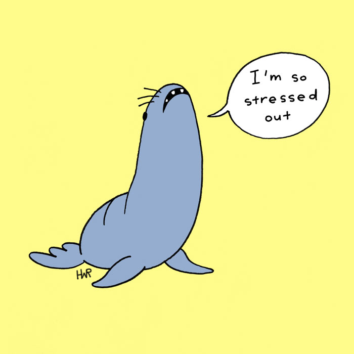 anxiousanimal_seals.jpg