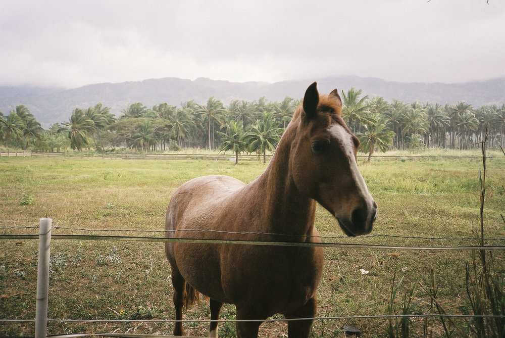 hawaii_f1000024 2.jpg