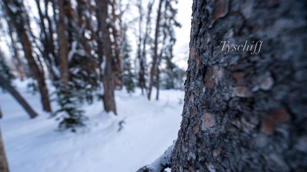 Tree Runs