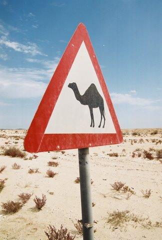 camel-sign.jpg