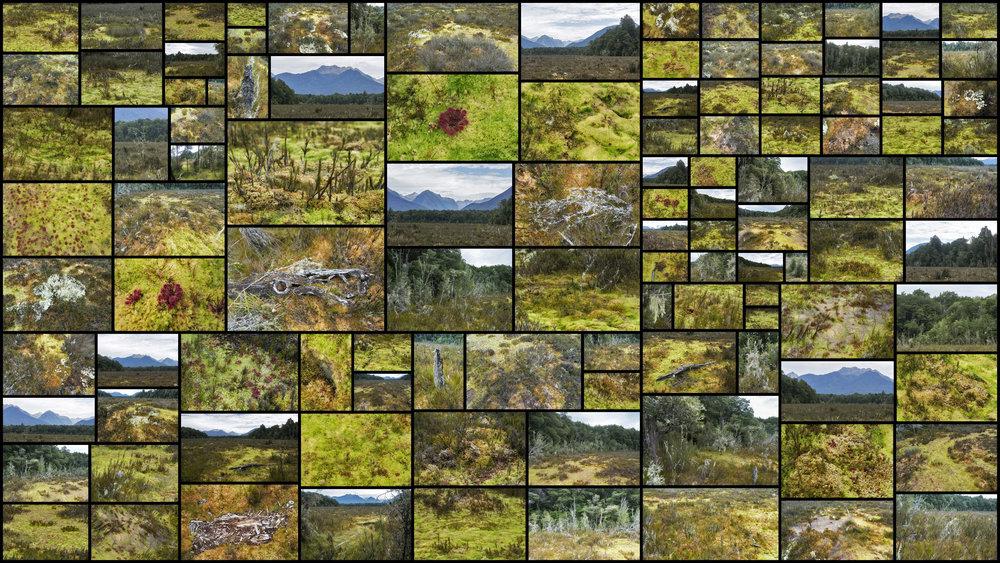 Mossy-Bog.jpg
