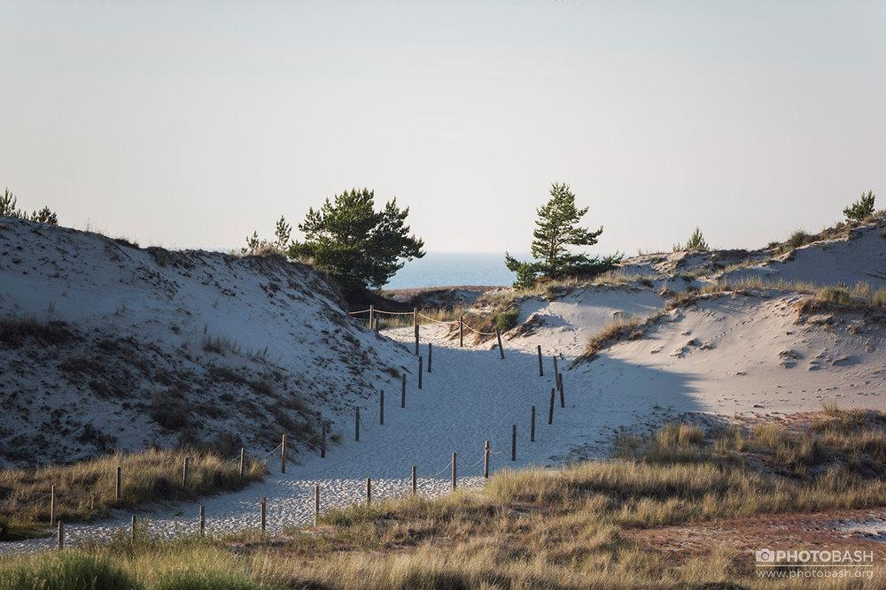 Coastal-Dunes-Beach-Grassy-Coast.jpg