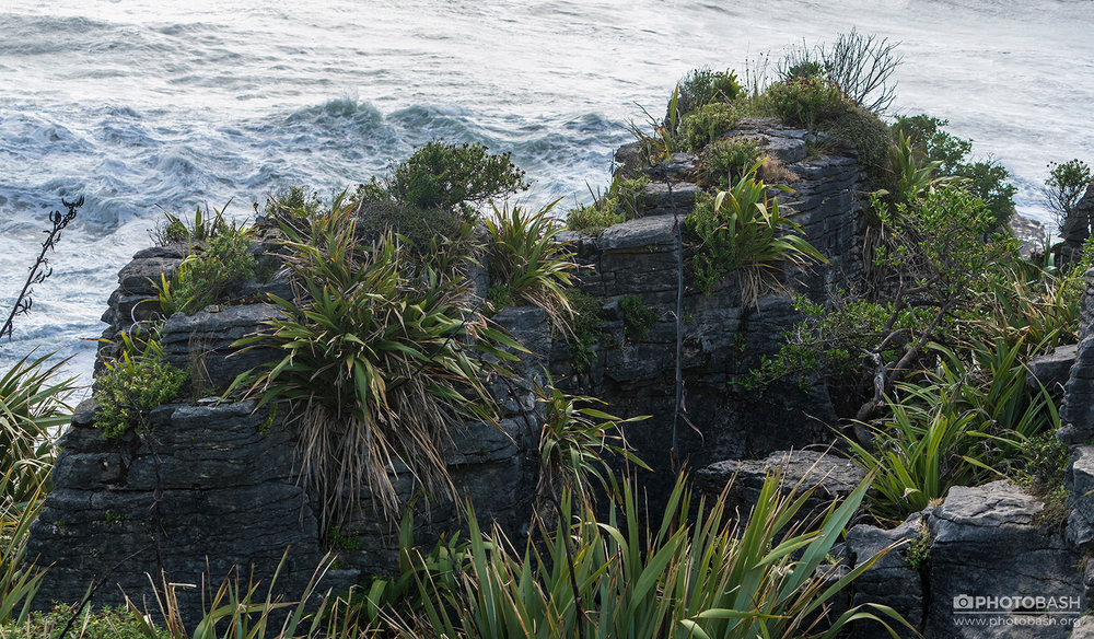 Eroded-Coastline-Cliff-Vegetation.jpg