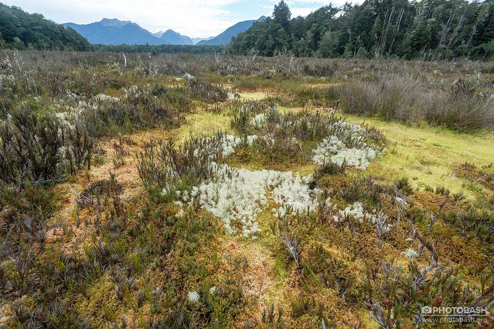 Mossy-Bog-Dead-Marshes-Wetlands.jpg