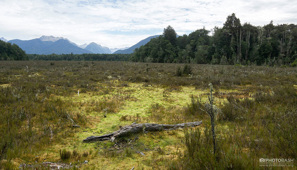 Mossy-Bog-Wetland-Marshes.jpg