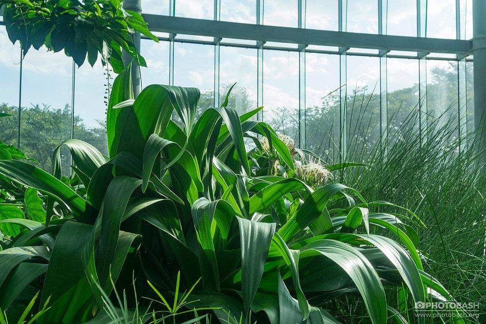 Parks-Gardens-Plant-Leaves-Texture.jpg