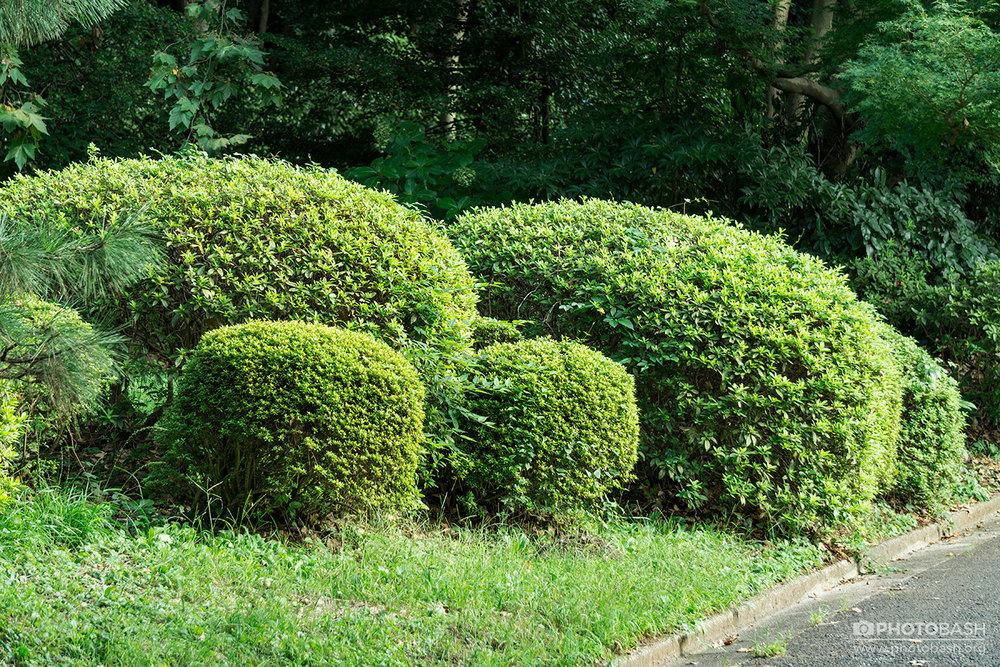 Parks-Gardens-Trimmed-Hedges.jpg