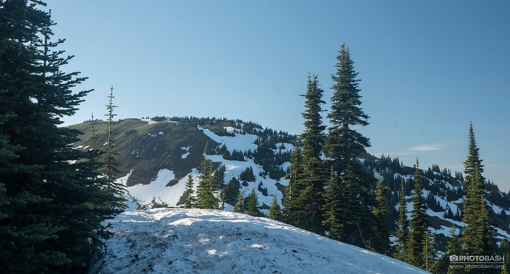 Pinewood-Mountains-Snowy-Spruce-Trees.jpg