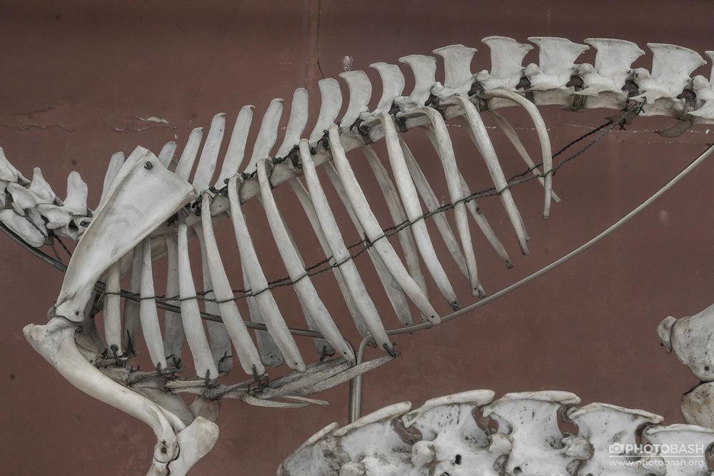 Skulls-Bones-Skeleton-Ribcage.jpg