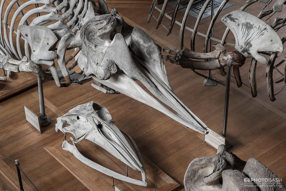 Skulls-Bones-Whale-Skeleton.jpg