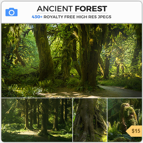 AncientForestMossyWoods