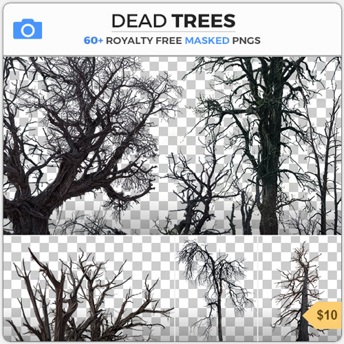 Dead Trees PNG Masked Branches