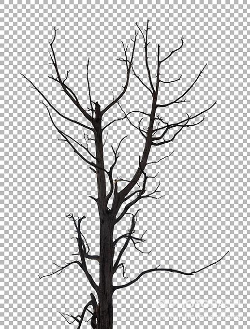 Dead-Tree-Scary.jpg