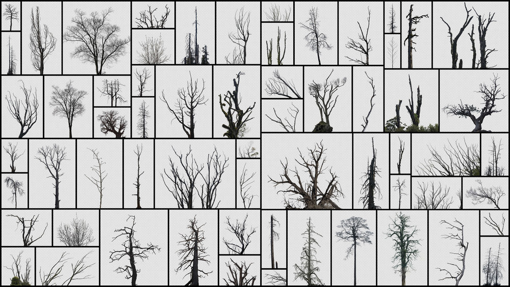 Dead-Trees.jpg
