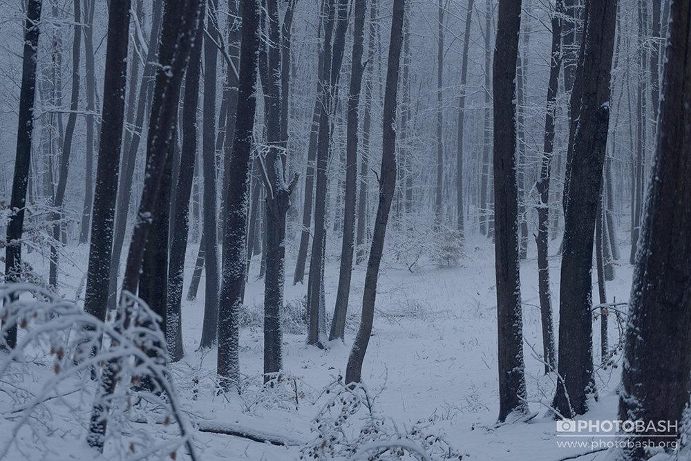 Winter-Forest-Dark-Woods.jpg