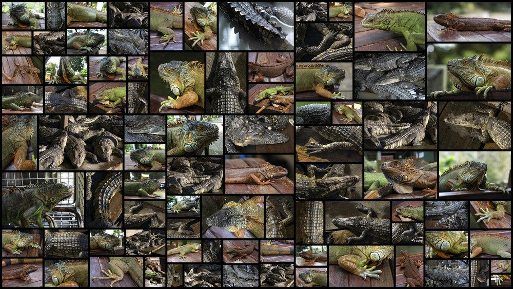 Reptiles.jpg