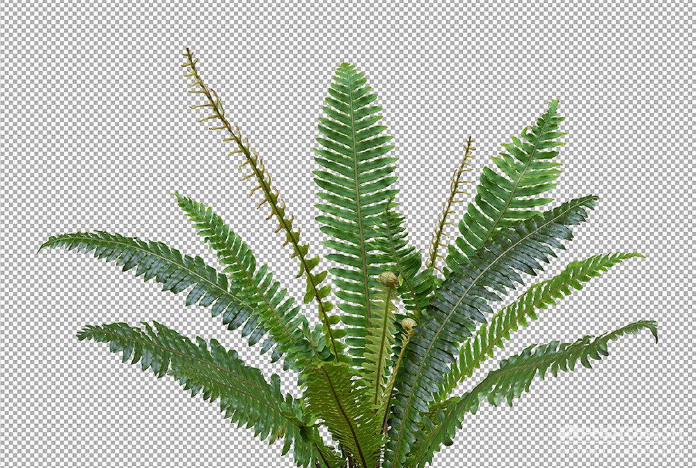 Prehistoric-Plants-Fern-PNG-Masked.jpg
