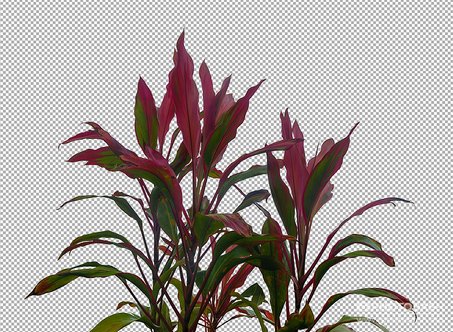 Prehistoric-Plants-Tropical-Transparent-Background.jpg