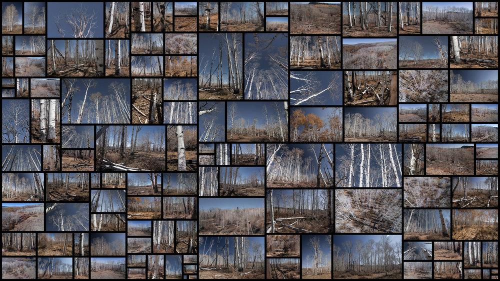 White-Forest.jpg