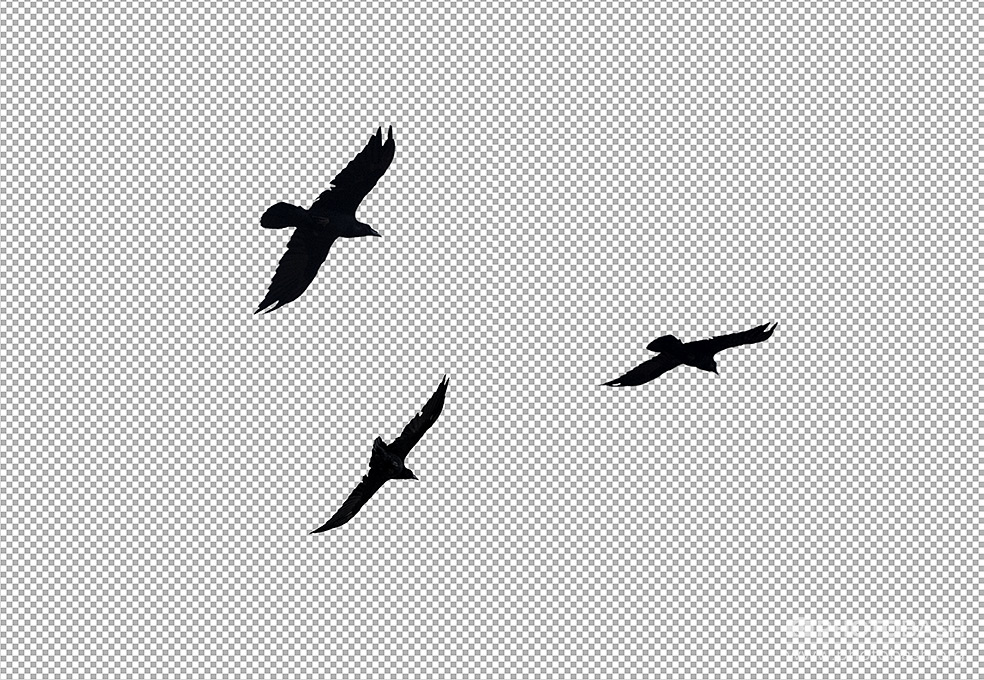 Crows-Ravens-Flying-Flock-Alpha.jpg