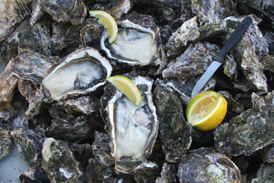 Buy Oysters Online