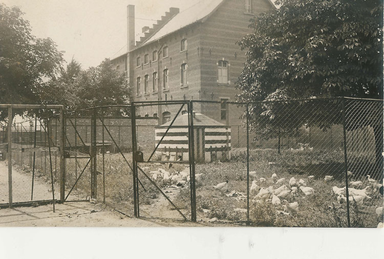 06HOEVEHHH-MET-KIPPEN.1897_foto_David_jpg.jpg