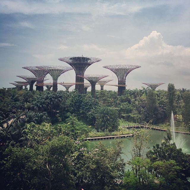 Not the set for a wacky new children's TV show, just the weird but wonderful @gardensbythebay #singapore #marinabar #instatravel #wanderlust #gardens #trees