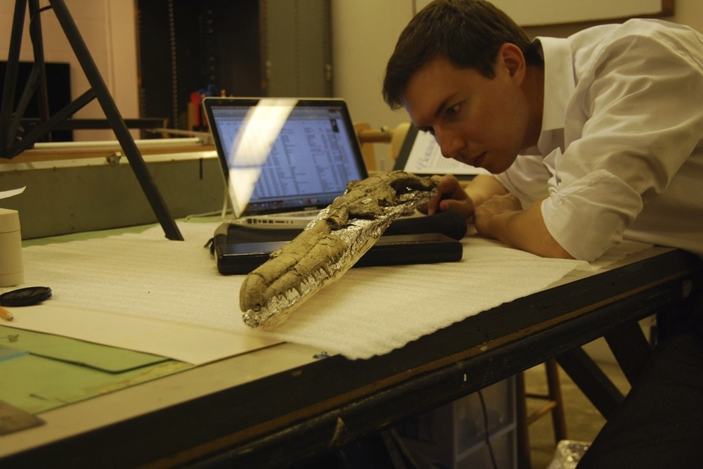 Studying the skull of Pelagornis sandersi at the Charleston Museum