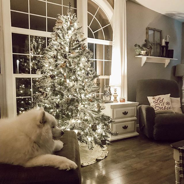 Even the dogs love the ambiance of Christmas🌲❤️
