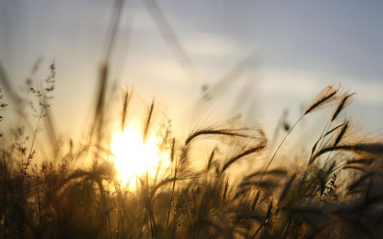 закат небо полевые растения  № 963405 бесплатно