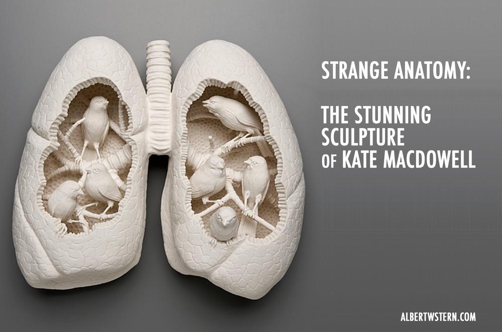 Strange Anatomy: The Stunning Art of Kate MacDowell — Albert w stern.com