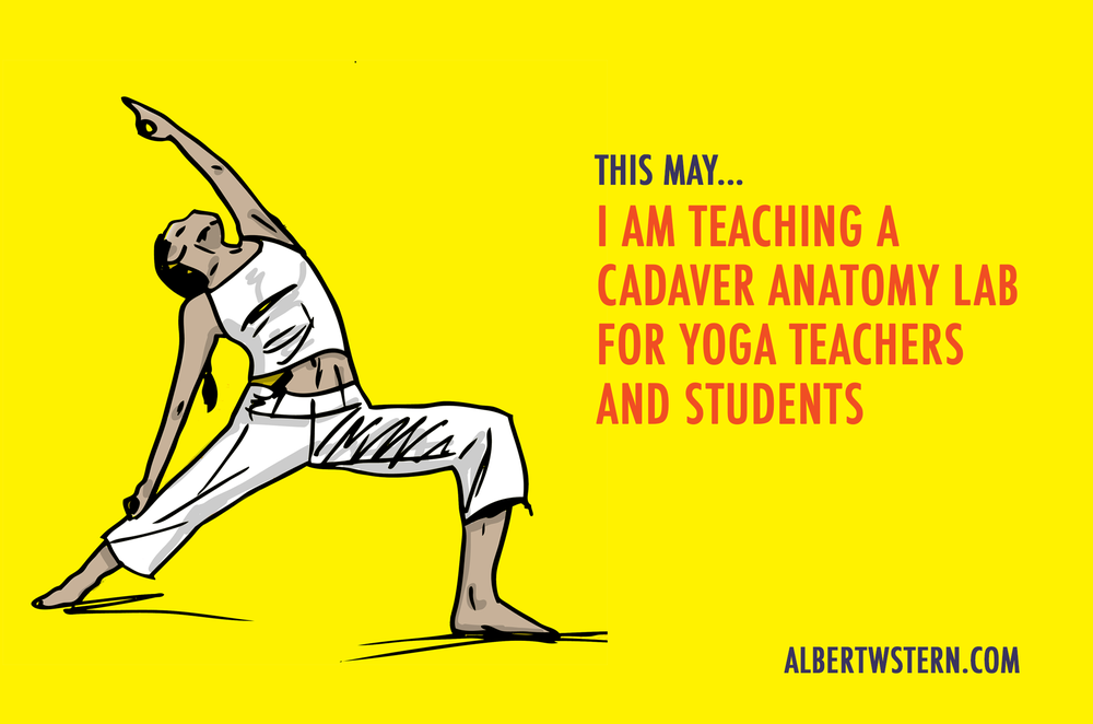 I Am Teaching An Anatomy Lab For Yoga Teachers And Students Albert