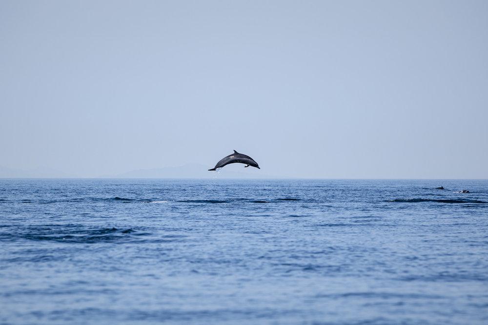 OS_GP_Ocean_Buru island-Handline_US1_7200 copy.jpg