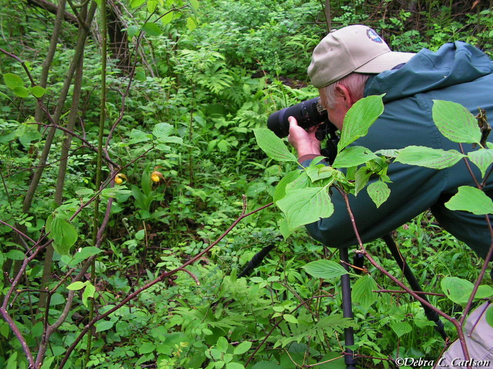 Mark-photographing-a-pair-of-Yellow-Ladys-slipper-orchids-©Debra L. Carlson.JPG
