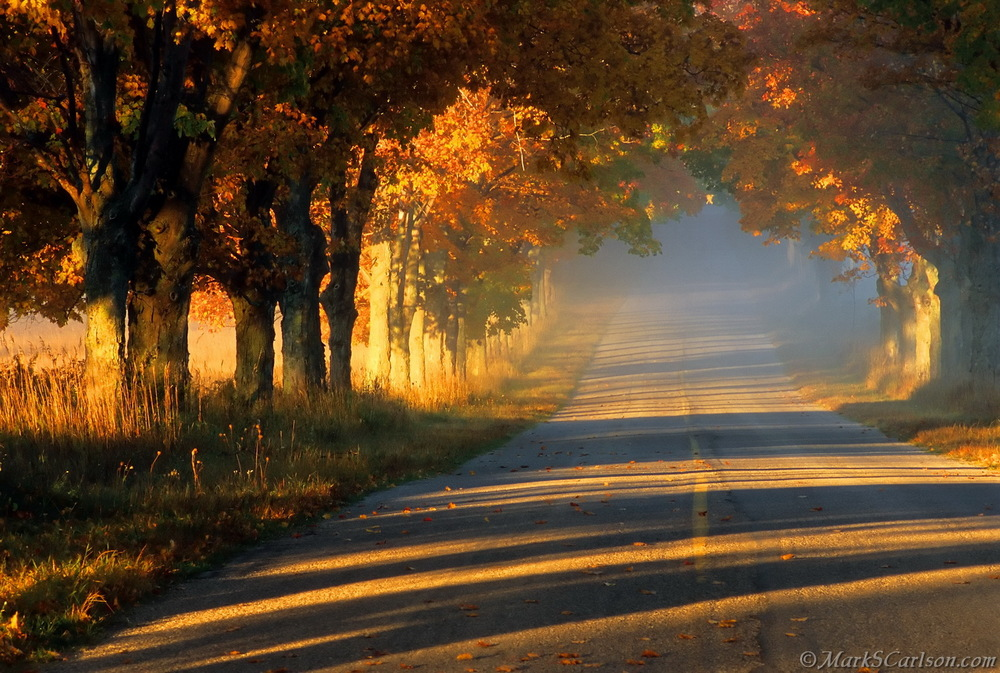 Autumn tunnel of trees road with sun streaks_resize.jpg