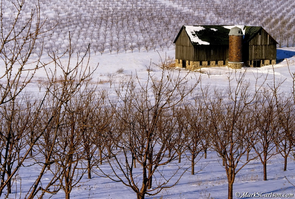 Barn in winter cherry orchard, Leelanau Peninsula ©markscarlson.com.jpg