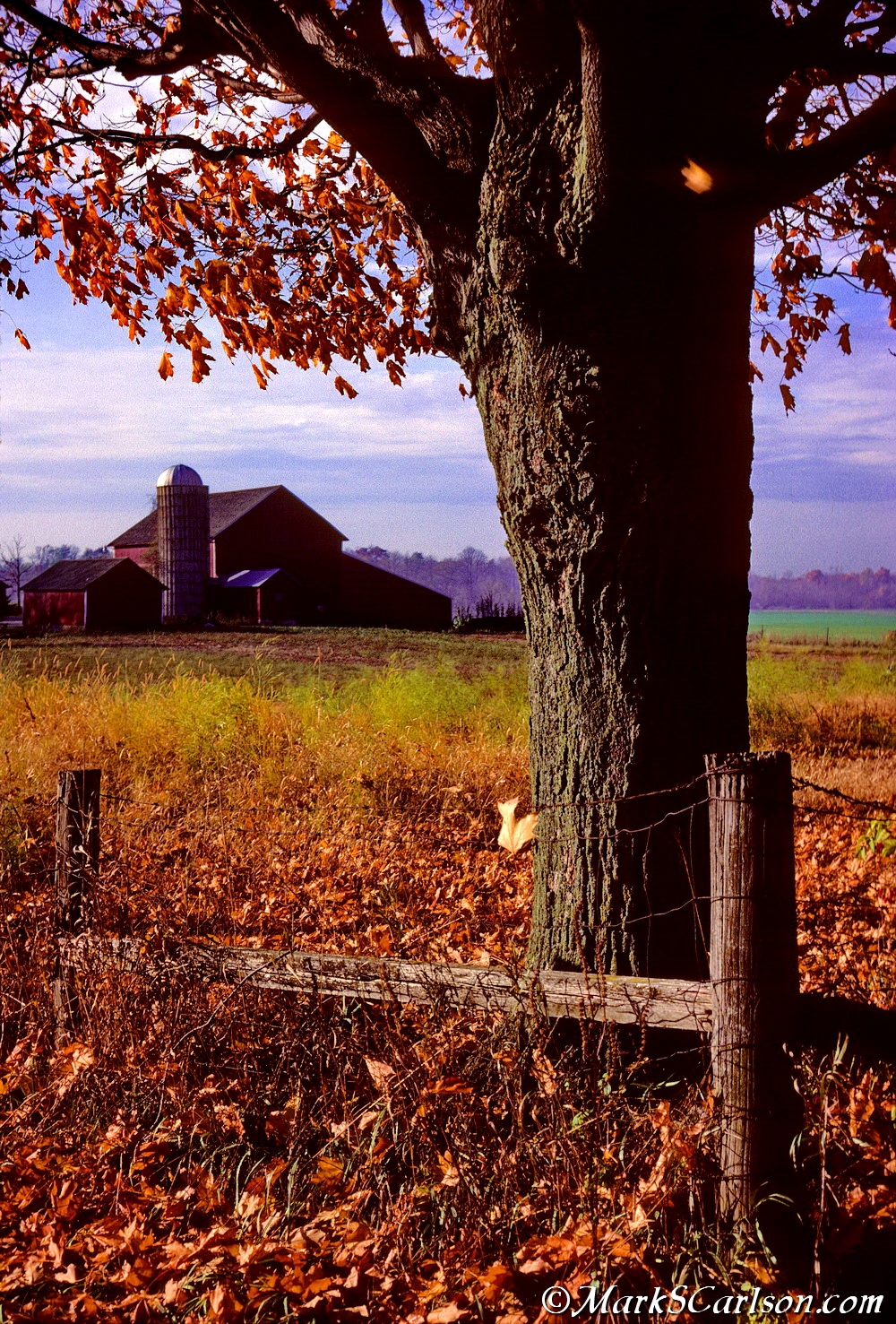 Barns from corner fence and sugar maple, autum_2_resize.jpg
