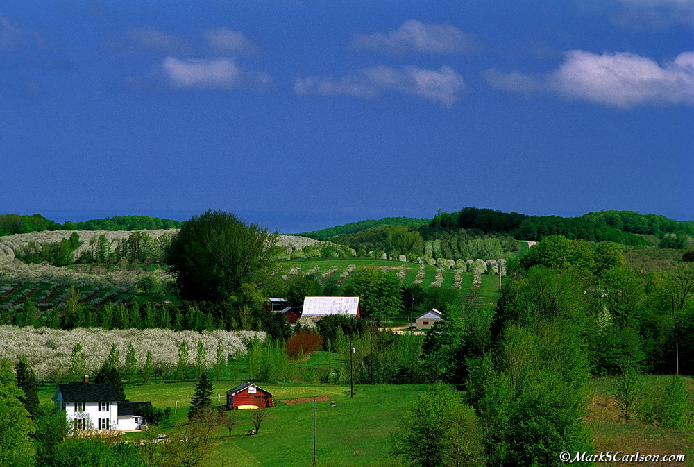 Cherry orchards in bloom, rolling landscape of Leelanau County; ©markscarlson_resize.jpg