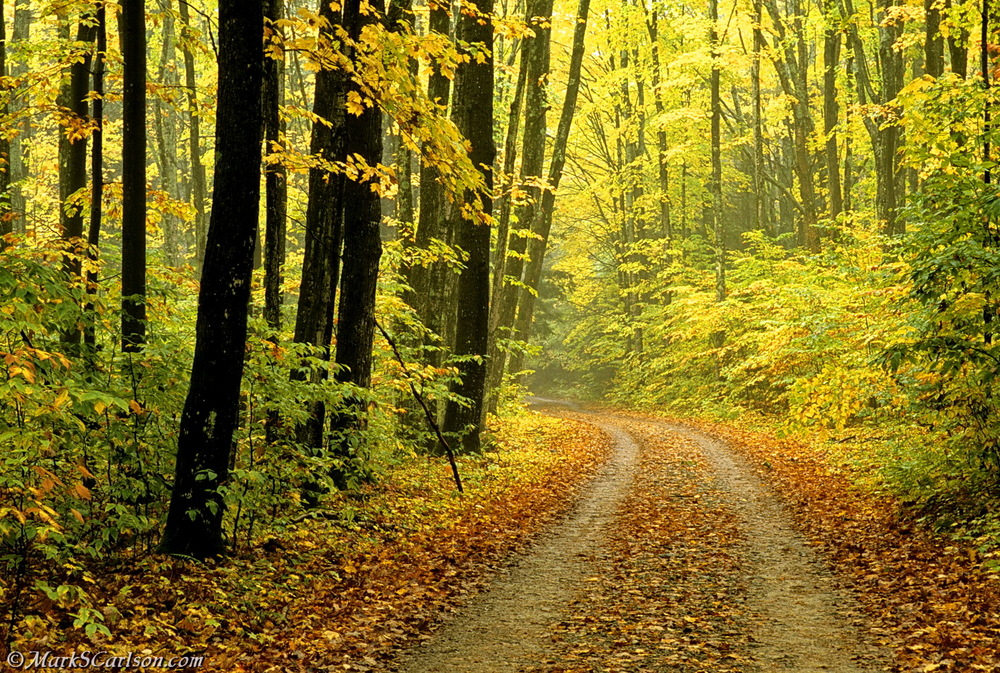 Two-track road thru autumn woods in light fog_2_resize.jpg