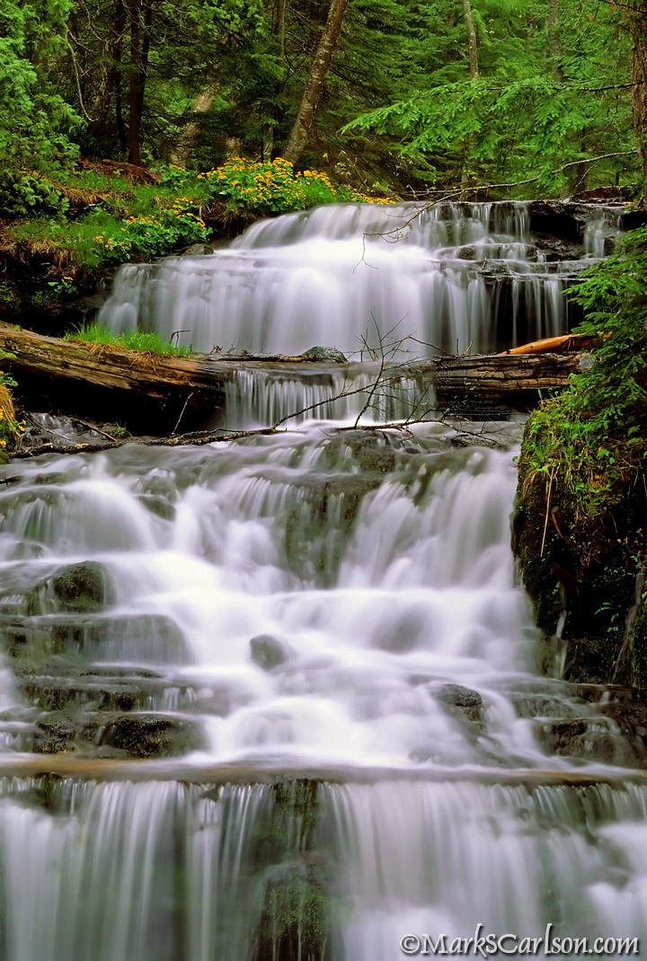 Wagner Falls, spring, with marsh marigolds (V) ©markscarlson.com_resize_2.jpg