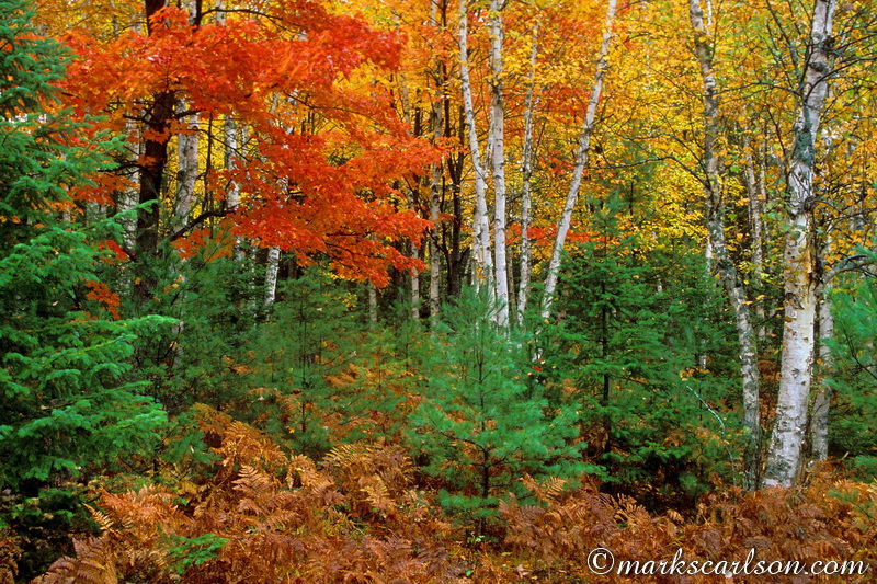 PBT004-Mixed northern forest, autumn ©markscarlson.com