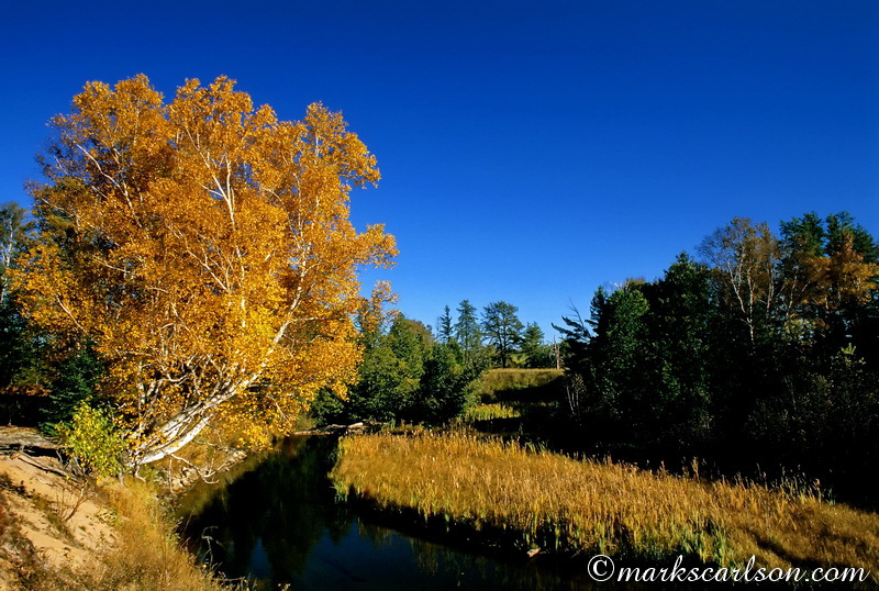 PBT006-Paper birch overhanging river, autumn ©markscarlson.com