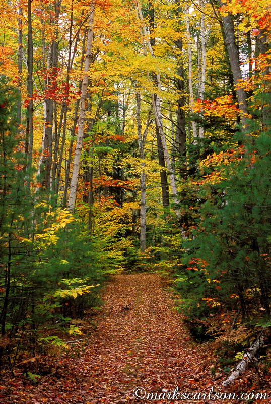 PBT019-Leaf-covered trail through north woods, autumn ©markscarlson.com