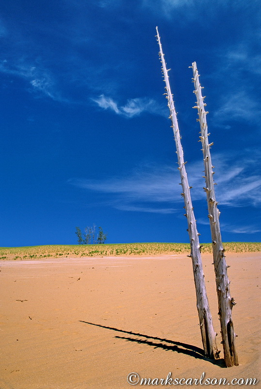 SBD028-Twin pine snags, ghost forest, Sleeping Bear Dunes ©markscarlson.com