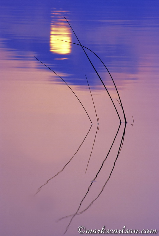 VP021-Lake rushes with sunset reflection ©markscarlson.com