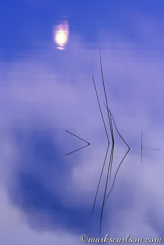 VP024-Reeds and moon reflection ©markscarlson.com