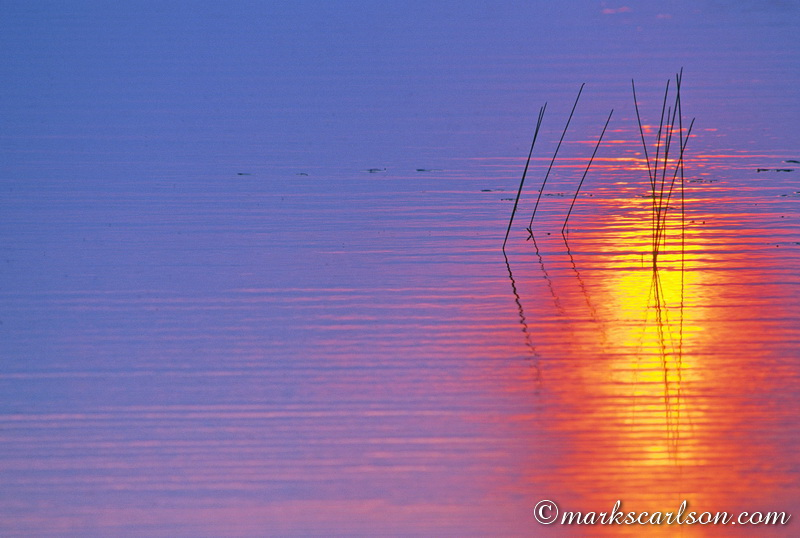 VP013-Reeds in sunset reflection ©markscarlson.com
