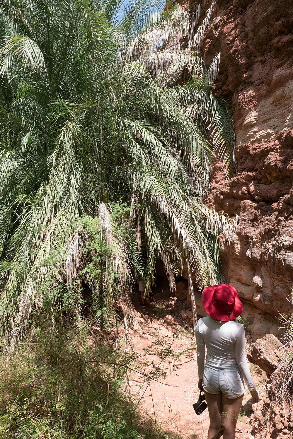 Anna Sohee Lee observing the change in plants @ Havasupai Falls. Copyright Hobo.Life