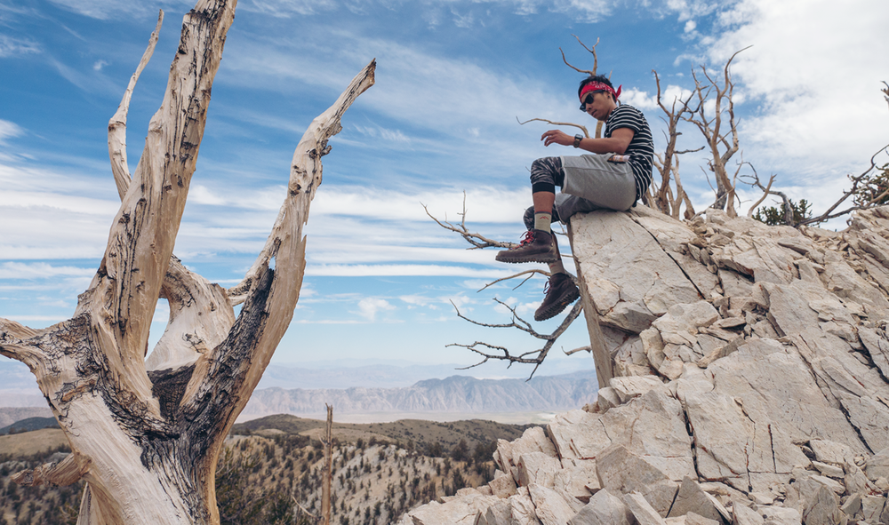 Oldest trees in the world @ Ancient Bristlecone Forest. Hoang Sitting on a high peak.